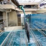 東京観光おすすめスポット 新江ノ島水族館のイルカショーが見どころで楽しすぎた話