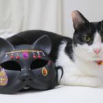 100均ハロウィン商品でかわいいコスプレ道具の作り方!ダイソーの猫のお面をお手軽DIY
